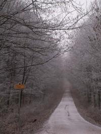 Cesta Ždánickým lesem