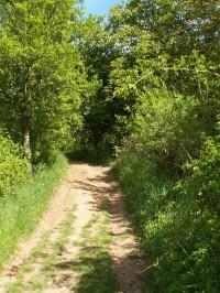 Cesta ke Stinské