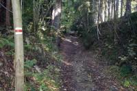 Lesní zářez cesty