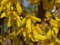 Jarní vyjížďka na Tesák v Hostýnských vrších