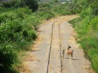 Místní obdivovatelé železnice