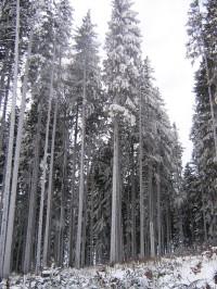 Stromy obalené ledem