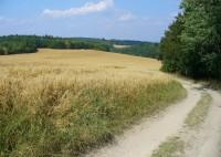 Polní cesta od Maršova