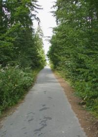 Lesní silnička k Ríšově studánce