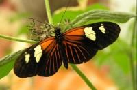 Motýlí dům - Žírovice