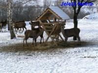 Jelení farma - Ječmeniště