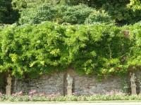 Lysice - zámecká zahrada