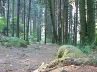 Cesta údolím Žebrakovského potoka (tzv. Údolíčko)