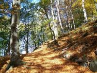 Lázeňské lesy v Karlových Varech
