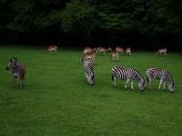 Večerní safari v ZOO Dvůr Králové