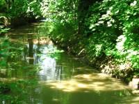 Meandry Botiče a Hamerský rybník