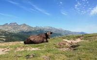Cestou k Lac de Nino - Korsika