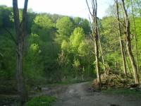 Jeskyně Netopýrka v Moravském krasu