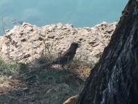 Bled a Bledské jezero