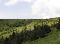 Národní přírodní rezervace Králický Sněžník