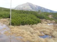 Úpské rašeliniště - přírodní rezervace