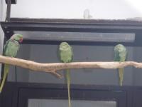 Pelhřimov - papoušci v parku