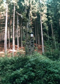 strom s obrázkem