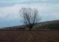 předjarní strom v polích