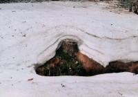 kolikrát že na Šumavě tu zimu sněžilo?