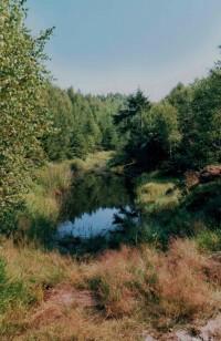 rašelinné jezírko na hřebeni