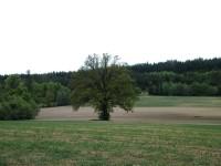 další strom v polích