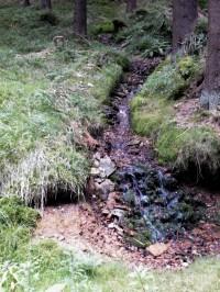 jeden z lesních potůčků