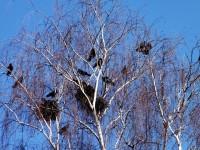 staré kročehlavské sídliště - přírodní rezervace