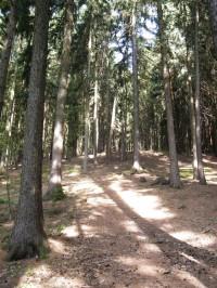 ani les moc chládku neposkytuje