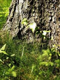 příští les bude smíšený