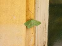 s motýlem začínáme