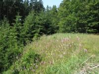 Z Veřovic do Rožnova - červen 2012