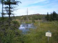 Cínovecké rašeliniště