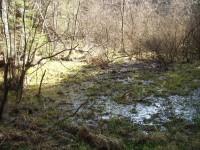 Rašeliniště Kamenka