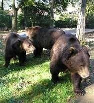 Medvědi Beroun