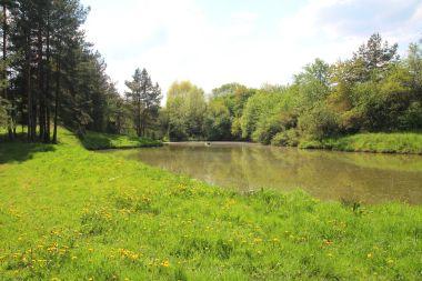 Obecní rybník