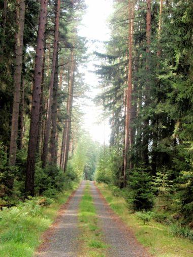 Mimoňské lesy 3