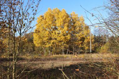Barvy podzimu