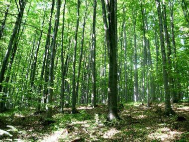 Bukové lesy Bílých Karpat