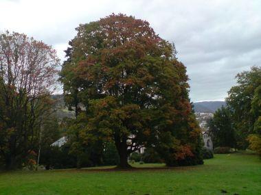jeden z mnoha nádherných stromů v zámeckém parku