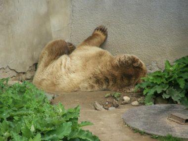 Medvědí lenošení na zámku