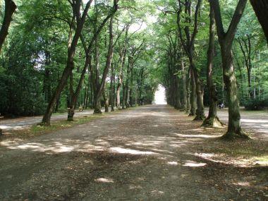 Stromořádí od brány z Ĺiboce
