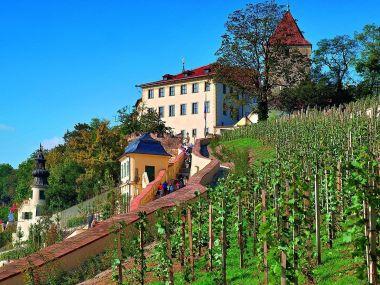 Pražský hrad: Svatováclavská vinice