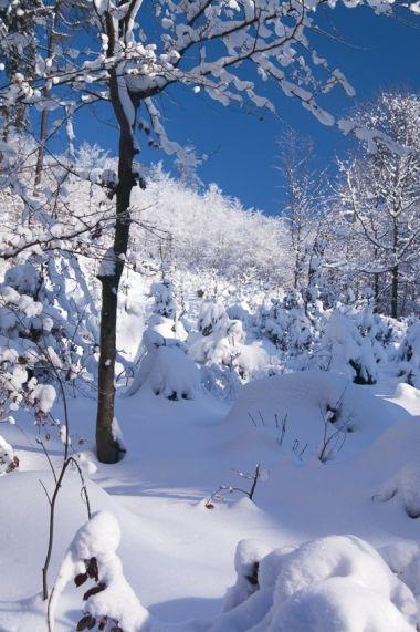 Když je čerstvý sníh