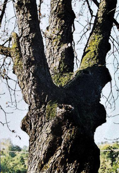strom u rybníků