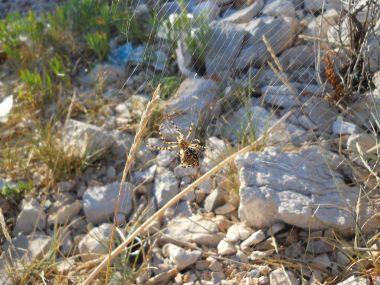 zátoka Remetič u ostrova Kaprije-pavouček
