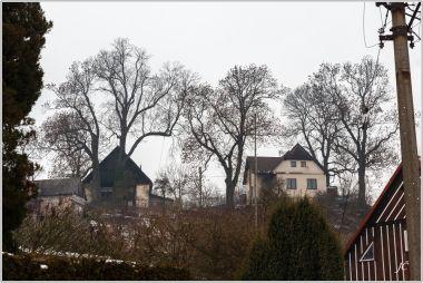 7-Žďárky, ze silnice jsou vidět památné Bartoňovy jasany