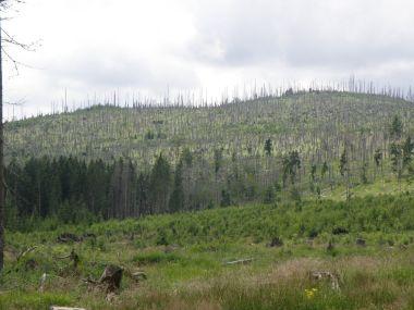 bez zásahová zóna - krásná šumava dle hnutí Duha