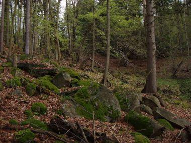 lesní partie v Kaffských horách