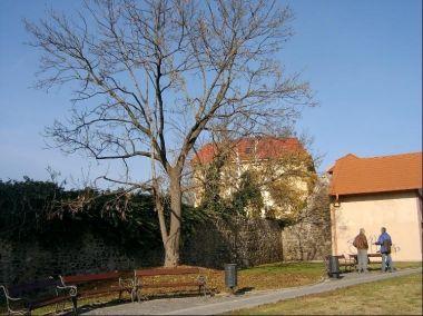 Z ul. Na Parkáně: Jižní část hradeb. Královské město Beroun bylo r. 1295 Výclavem II. založeno jako hrazené, hradby obepínaly jeho čtvercový půdorys.